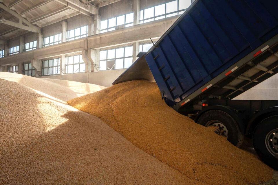 Більше 6 млн тонн українського зерна вже пішло на експорт